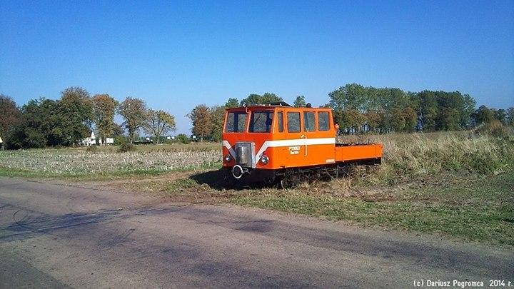 Tuż przy drodze Nowy Staw - Lubieszewo, fot. D. Wenta